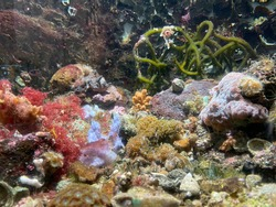 Colourful corals and sealife were displayed in a underwater world centre