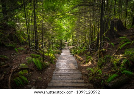 Colourful Fairy Tale Hiking Trail at Lynn Canyon Park, North Vancouver, British Columbia, Canada #1099120592