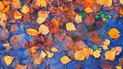 Colourful fall leaves in pond lake water, floating autumn leaf. Fall season leaves in rain puddle. Sunny autumn day foliage. October weather, november nature background. Beautiful reflection in water