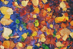Colourful fall leaves in pond lake water, floating autumn leaf. Fall season leaves in rain puddle. Sunny autumn day foliage. Beautiful reflection in water