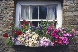 Colourful flowers in window box
