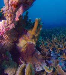 Colourful Hard coral at the bottom of tropical sea