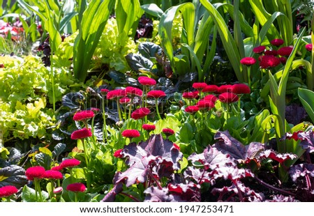 Colourful herbaceous border with red daisies in the St John's Lodge garden, located in the Inner Circle, Regent's Park, London UK Stock fotó ©