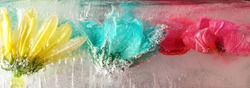 Colourful ice covered flowers showing frozen petals a flower heads Ice flowers frozen flower heads frozen in a solid block of frozen water