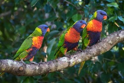 Colourful parrots perched in a branch