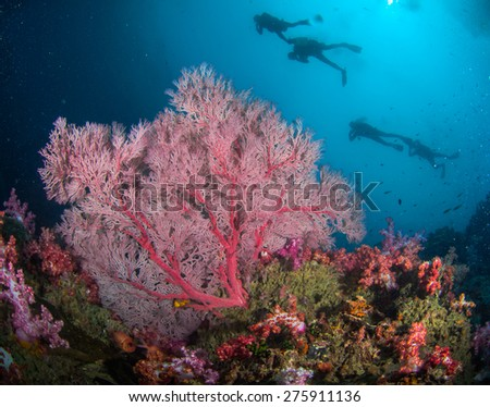 Colourful sea fan with divers in the deep blue sea
