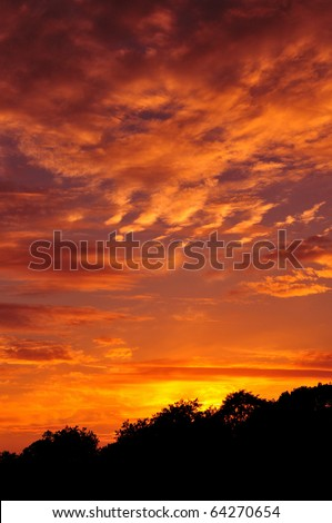 Colourful Sky and Forest Silhouette at Sunset