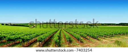 Colourful Vineyard in One Tree Hill, South Australia