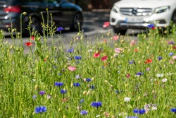 Colourful wild flowers, including cornflowers and poppies, on a roadside verge in Ickenham, West London UK. The Borough of Hillingdon has been planting wild flowers next to roads to support wildlife.