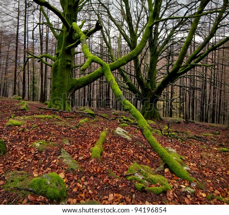 Colours of autum in the green forest
