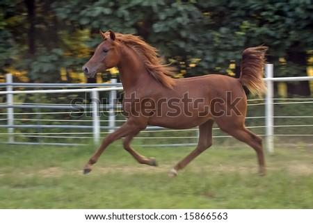 Colt Running - stock photo