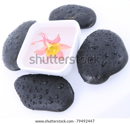 Columbine flower floating in a bowl and spa stones on white