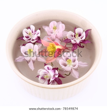Columbine flowers floating in a bowl on white background