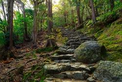 Combblestone path in the forest leading to the Kamikura Shinto temple, Kumano Kodo pilgrimage track, Shingu, Japan
