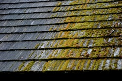 combination of thatched and shingled roof. In the shade or in a rainy climate, it is covered with moss and gradually degrades and decomposes