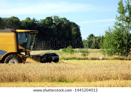 Combine harvester cutting wheat on wheat field in sunny day. Harvest time.