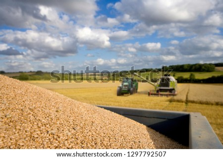 Combine harvester emptying harvested wheat grain into tractor trailer #1297792507