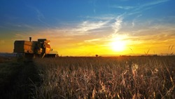 Combine harvester gathers the wheat crop at sunset, cinematic shot