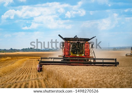 Combine harvester harvest ripe wheat on a farm. Grain harvesting equipment in the field