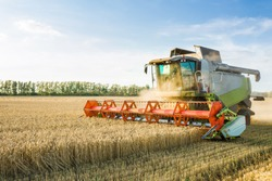 Combine harvester harvesting ripe golden wheat on the field. The image of the agricultural industry