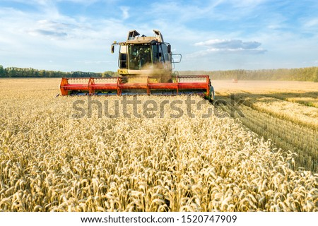 Combine harvester harvesting ripe golden wheat on the field. The image of the agricultural industry #1520747909