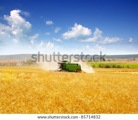 Combine harvester harvesting wheat cereal in farm