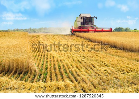 Combine harvester harvests ripe wheat #1287520345