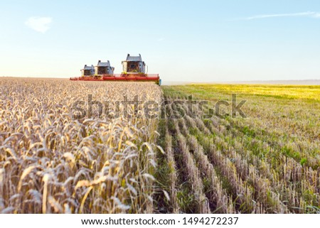 Combine harvester harvests ripe wheat. agriculture #1494272237