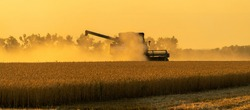 Combine harvester in a cloud of dust during harvesting