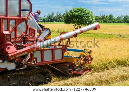 Combine harvester in action on rice field. Harvesting is the process of gathering a ripe crop from the fields in thailand #1227746809