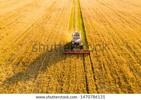 Combine harvester in field. Cereal agricultural industry. Agricultural machinery works. Rural scenery. Rich harvest concept.
