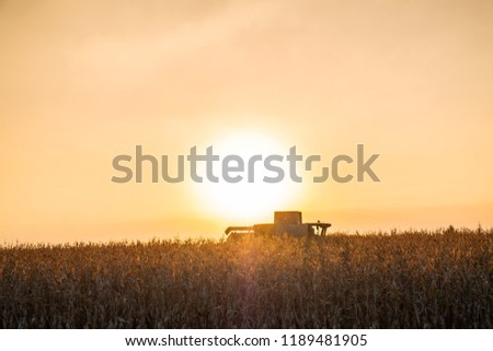 Combine harvester machine working in corn field at sunset. Multi purpose thresher tracktor gathering crop in beautiful sunlit area
