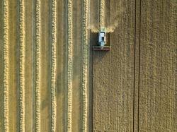Combine harvester on a cornfield 3