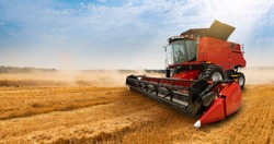 Combine harvester on the wheat field