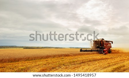 Combine harvester working on a wheat field. Seasonal harvesting the wheat. Agriculture.