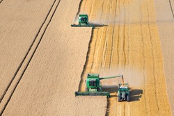 Combine harvesters harvesting wheat into the trailer in a rural field