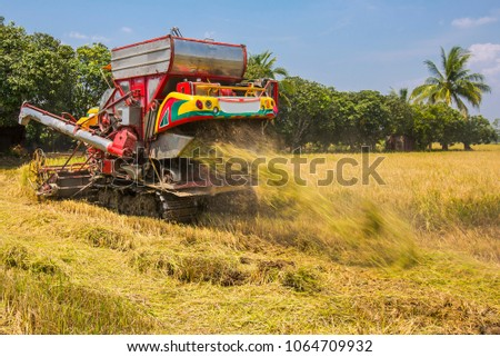 Combine harvesters is working on the fields