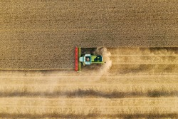 Combine harvesters works on yellow rye field, aerial top down view from drone.