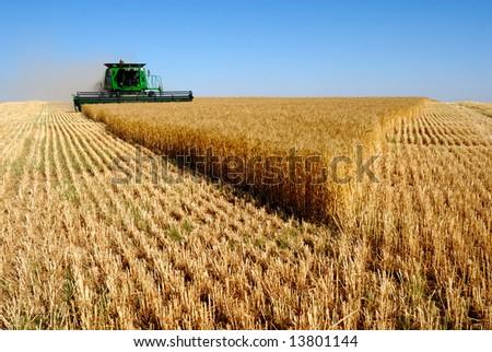 combine harvesting - stock photo