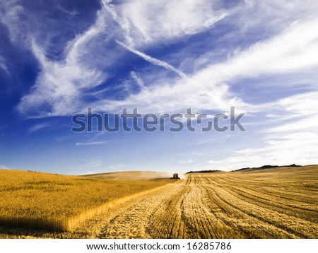 Combine harvesting a wheat field - stock photo