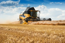 combine harvesting cereals, sky with beautiful clouds. harvesting cereals in Ukraine