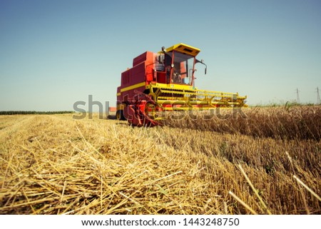 Combine harvesting in a field of golden wheat #1443248750