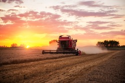 Combine harvesting the field of wheat on a sunset.