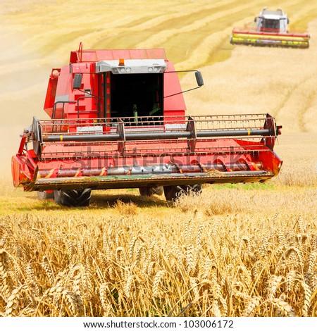 Combine harvesting wheat.