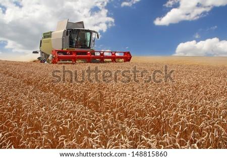 Combine harvesting wheat #148815860