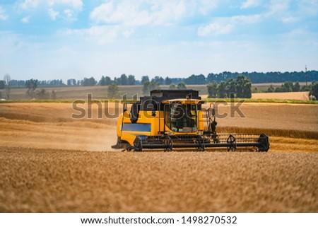 Combine harvesting wheat. Grain harvesting equipment in the field. Harvest time