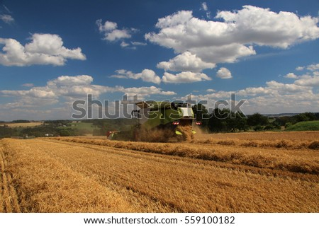 Combine in barley, summer harvest, blue sky with clouds, side perspective #559100182