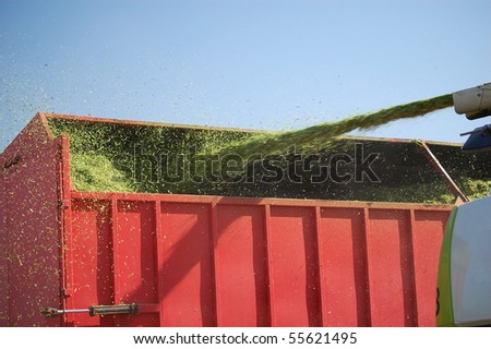 Combine Transferring Cut Silage to Feed Trailer