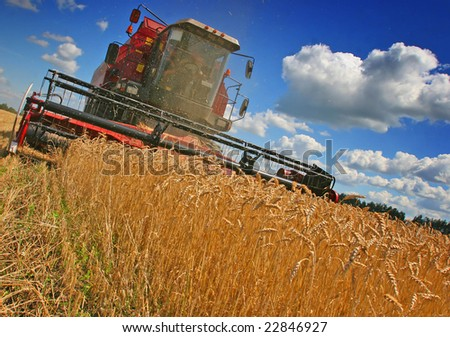 combines harvest grain on the field
