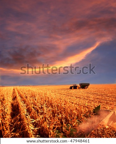 combining corn in field under sunset skies